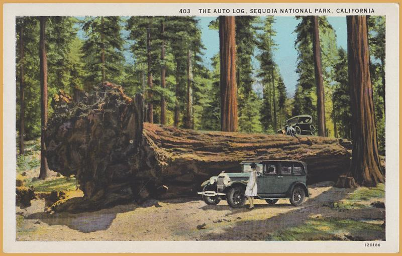 Sequoia National Park, California - The Auto Log, Cars parked on large tree