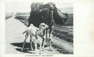 A youngster in the desert postcard