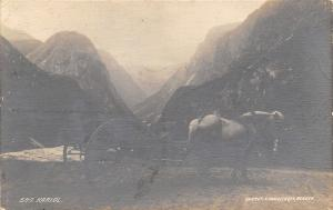Naerodalen Sogn Norway~Kariol: Horse Drawn Carriage~Knudsen Photo~1913 RPPC