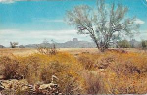 US Unused. Arizona beautiful flowering desert.