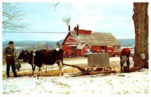 Vermont Putney , Harlow's Sugar House, Sugaring