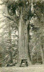 Art Ray Redwood Highway California Humbolt RPPC Photo Postcard 20-9838