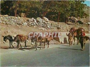 Postcard Modern Nomads Afghanistan Salang Pass Sheep Folklore