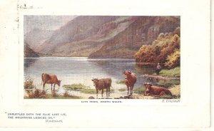 E.Longstaffe. Cows in Llyn Peris, North Wales Tuck Oilette Postcard # 9703