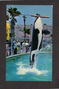 FL Whales Shamu the Killer Whale Sea World Seaworld Orlando Florida Postcard