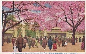 Ueno Park Cherry Trees Antique Japanese Postcard