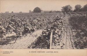 Michigan Lawton A Grape Vineyard