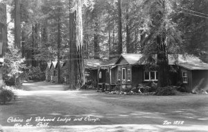 RPPC Cabins at Redwood Lodge & Camp, Big Sur, CA c1940s Vintage Zan Postcard