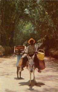 Local Transportation Through Bamboo Grove Jamaica Unused