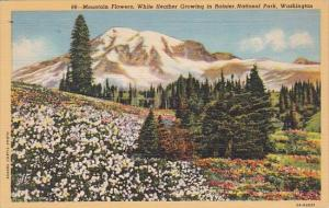 Mountain Flowers White Heather Growing In Rainier National Park Washington 1945