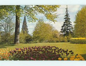 Unused Pre-1980 TULIP FLOWER GARDEN AT KINGWOOD CENTER Mansfield Ohio OH t3813