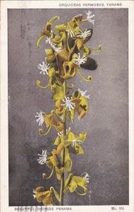 Beautiful Orchids, PANAMA, PU-1942