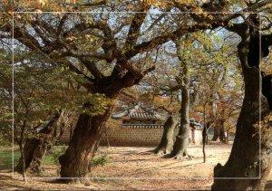 South Korea Kyeongju Gyerim Forest