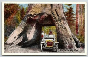 Big Trees CA~A Couple of Couples Ride Vintage c1914 Auto Under A Carved Tree~PC