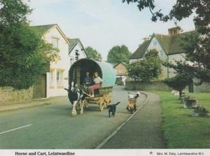 Leintwardine Hereford Village Old Horse & Cart Romany Gipsy Style Postcard