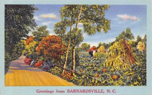 Barnardsville North Carolina~Rural Road Past Pumpkin Patch~Cornstalks~1940s PC