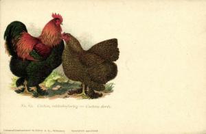 Chicken Hen Rooster, Cochin, Rebhuhnfarbig, Dorés (1910s) No. 62