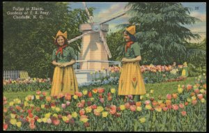Tulips in Bloom, Gardens of J.B. Ivey, Charlotte, NC. Curt Teich linen card 1946