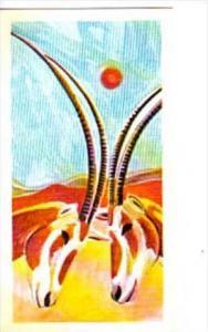 Brooke Bond Tea Trade Card Vanishing Wildlife No 25 Scimitar Horned Oryx
