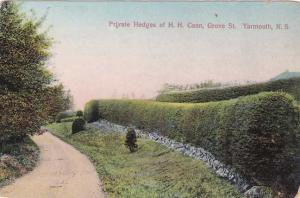 Private Hedges of H. H. Cann on Grove Street Yarmouth NS Nova Scotia Canada - DB