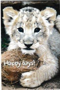 Postcard Animals Happy Days Lion Cub