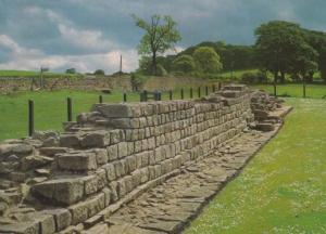 Hadrians Planetrees Roman Wall Northampton Rare Postcard