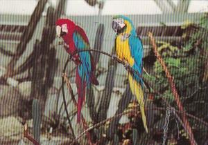 Canada Vancouver Red & Blue Macaws At Bloedel University Queen Elizabeth Park
