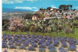 BR4570 Vieux village et champ de lavande provence fleurs flowers  france