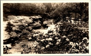 RPPC Mountain Laurel & Rhododendron, Pub. Chattanooga TN Vintage Postcard K24