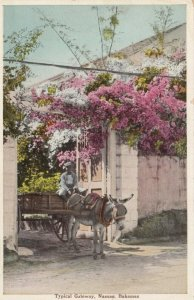 NASSAU, Bahamas, 1900-10s; Typical Gateway, Donkey pulled cart