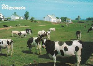 Wisconsin Typical Dairy Farm Holstein Cows