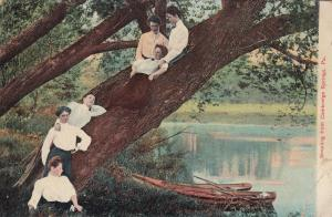 CAMBRIDGE SPRINGS , Pennsylvania , 00-10s ; Girls in a tree