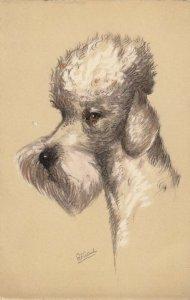 AS: Portrait of Poodle Dog, 1900-10s
