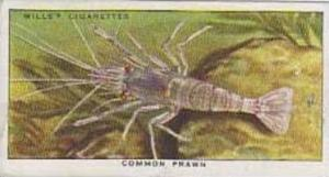 Wills Vintage Cigarette Card The Sea-Shore No 25 Common Prawn  1938