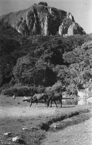 Zimbabwe Southern Rhodesia, Vumba, Leopard Rock Horses (Mozambique)