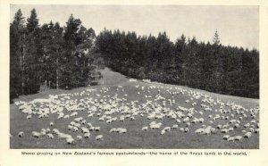 Vintage New Zealand Postcard, Sheep Grazing on Pasturelands GN5