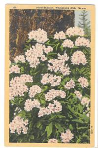Rhododendron Washington State Flower Vtg Linen Postcard WA