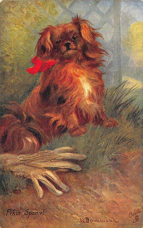 Raphael Tuck Pet Dogs # 9639 Pekin Spaniel Signed Drummond Postcard