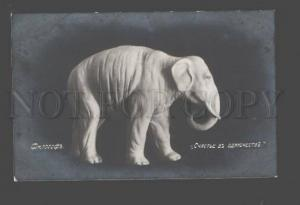 093962 Happy ELEPHANT as Philosopher Vintage PHOTO Russian