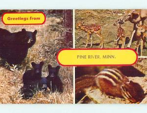 Unused Pre-1980 BLACK BEAR & DEER & CHIPMUNK Pine River MN t4698