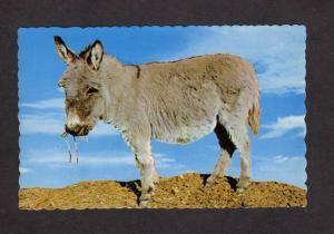 Baby Burro Mule Mules Rocky Mountain Canary Postcard Donkey  Postcard