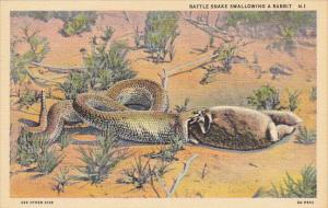 Rattlesnake Swallowing A Rabbit Curteich