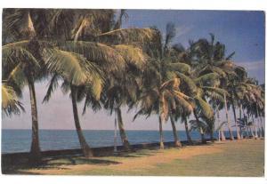 Atlantic Coast, Colon, Panama
