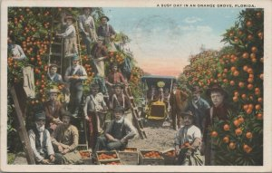 A Busy Day In An Orange Grove Florida Vintage Postcard
