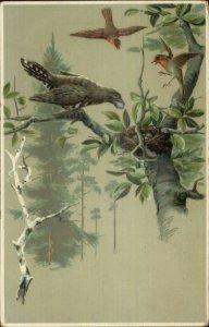 Bird Nest Stealing Eggs - Jays & Robins? c1910 Postcard