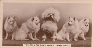 Poodle Lovers Loving Dogs Dog German Antique Photo Cigarette Card