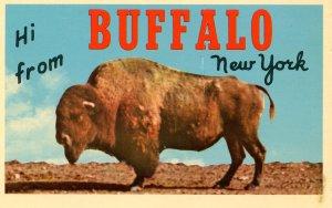 NY - Hi from Buffalo, NY