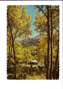 Amber Foliage of Aspen Near Ghost Town, Colorado,