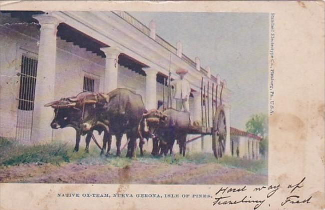Philippines Isle Of Pines Native Ox Team Nueva Gerona 1906