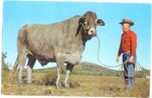 'Jimbo' Big Steer 3200 lbs Centerville Oklahoma OK